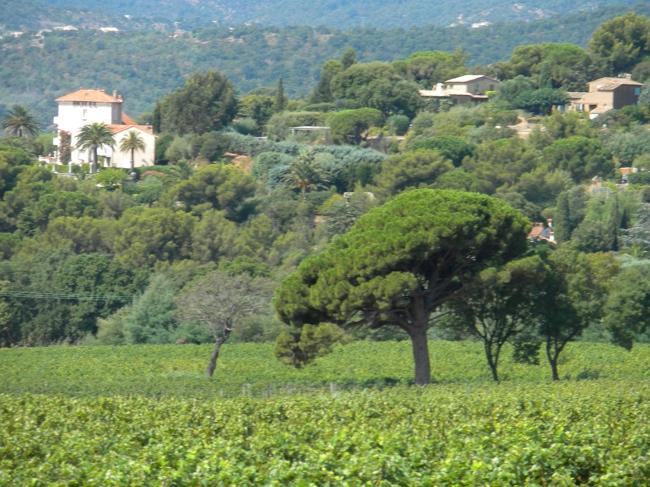 A hotel near a vinyard