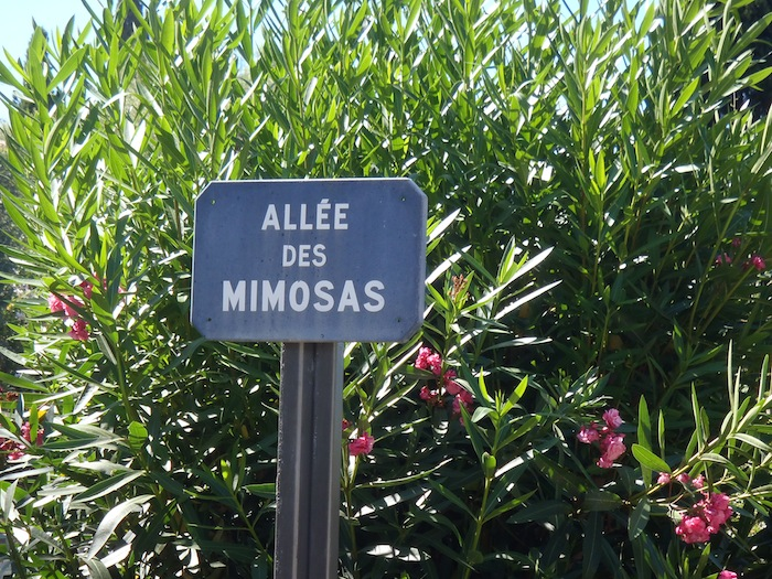 Mimosas Lane
